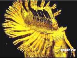 Video -Thái Lệ Hoa: Vũ Nữ Câm Điếc Nổi Tiếng Nhất Trung Quốc Với Thiên Thủ Quán Âm