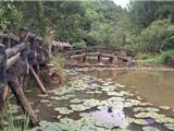 Chùm Ảnh: Rừng Thiền Huyền Không Sơn Thượng