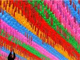 Seoul Thắp Sáng Đèn Lồng Mừng Phật Đản Sanh