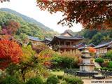 Vì Sao Hàn Quốc Muốn Du Khách Ở Chùa?