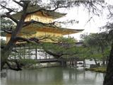 Tĩnh Tâm Nhẹ Bước Bên Chùa Vàng Nhật Bản