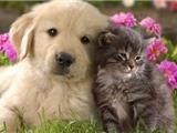 Đài Loan - Quốc Gia Phật Giáo Đầu Tiên Cấm Tiêu Thụ Buôn Bán Chó Mèo Ở Châu Á