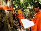 Campuchia: Các Nhà Sư Chiến Đấu Để Bảo Vệ Rừng