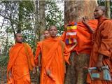 Campuchia: Các Nhà Sư Tổ Chức Quy Y Cho Cây Cổ Thụ Bảo Vệ Rừng