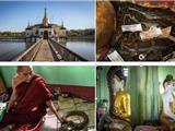 Huyền Bí Ngôi Chùa Nuôi Rắn Ở Miến Điện