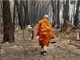 Cháy Rừng Làm Ảnh Hưởng Đến Cộng Đồng Phật Giáo Ở Úc Châu