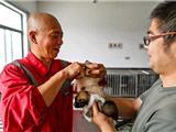 Một Nhà Sư Giải Cứu Và Chăm Sóc Hơn Tám Ngàn Con Chó Ở Thượng Hải