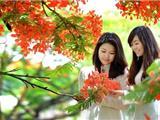 Trại Hoa Hường
