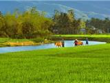 Non Nước Việt Nam, Non Nước Tôi