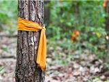 """Thái Lan: Các Nhà Sư """"Xuất Gia"""" Cho Cây Để Chống Phá Rừng"""
