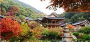 Hàn Quốc: Tham Dự Olympic Mùa Đông Trải Nghiệm Ở Chùa